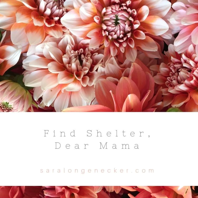 find shelter