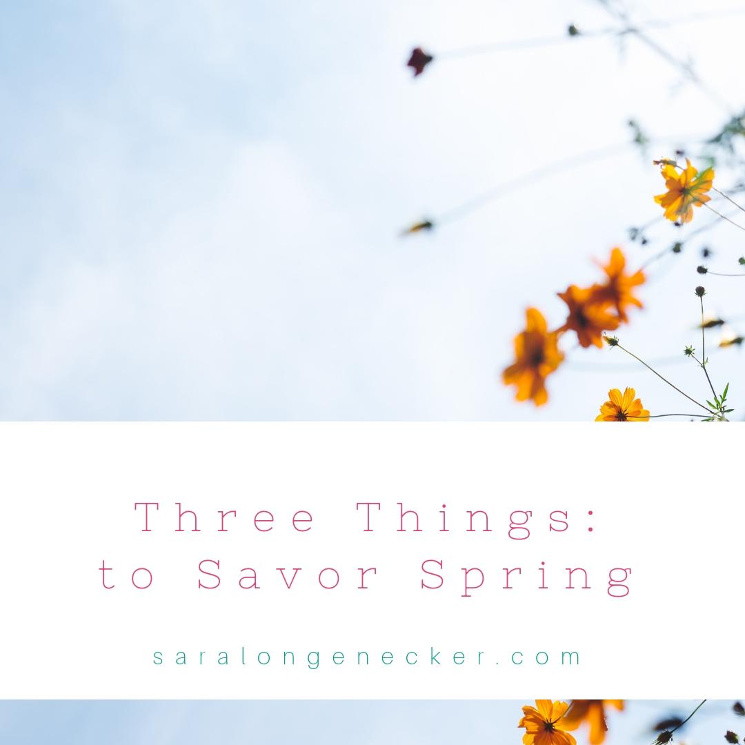 savor spring