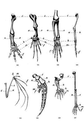 darwin homology