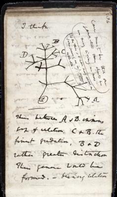 Darwin_Tree_1837.png